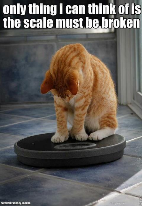 cat broken scale